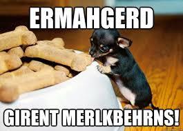 Ermahgerd Animal Memes - 8 best animal ermahgerd memes images on pinterest funny animals