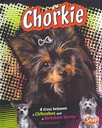 chorkie haircut styles yorkshire terrier energetic and affectionate yorkshire terrier