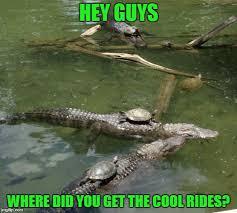 I Like Turtles Meme - i like turtles imgflip