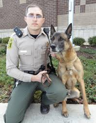 belgian malinois vest rico newest member of morgan county sheriff u0027s canine unit al com