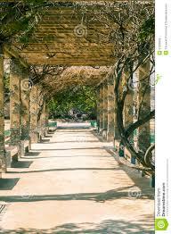 pergola tunnel of climbing plant stock photo image 52298596