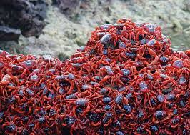 pink slugs drunken parrots giant earthworms and tree lobsters
