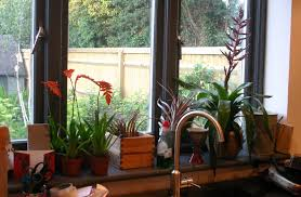 Kitchen Windowsill Kitchen 101 Creating Healthier And Greener Kitchen Homesfeed