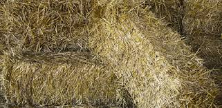 hay and straw as bedding for outdoor animals trailers
