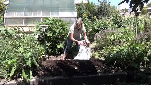 Fall Plants For Vegetable Garden by Fall Vegetable Garden Preperation Youtube