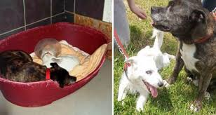 Blind Dog And His Guide Dog Blind Jack Russell Terrier And His U0027guide Dog U0027 Need A New Home Fox59