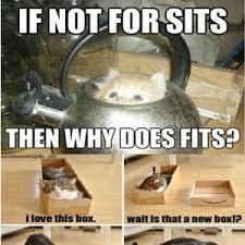 Random Cat Meme - random cat memes by recyclebin meme center