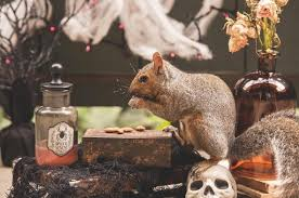 she threw a dinner party for some friendly squirrels