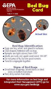 What To Use On Bed Bug Bites Bed Bugs The Epa Blog