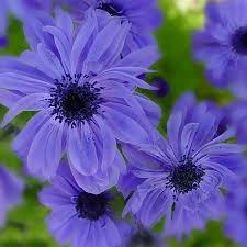 92 best luvin my purple images on pinterest lilac color purple