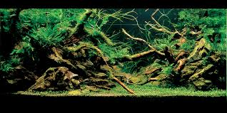 Amano Aquascaping Aquascapes