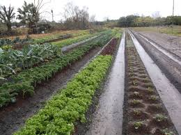 wmnf florida friendly landscaping and your cooperative extension