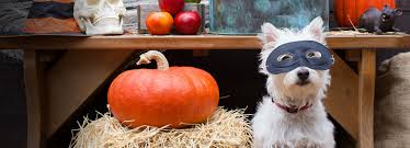 Family And Dog Halloween Costumes by Amazon Com Pet Supplies
