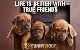 True Friend Meme - if you want unconditional love all you need is a dog truly the