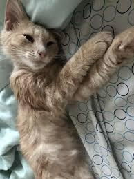 man broken hearted from a breakup finds stray kitten meowing