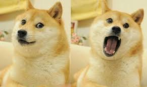 Original Doge Meme - doge sl ad caign in stockholm declared not racist against