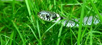 How To Avoid Snakes In Backyard How To Keep Snakes Out Of Your Pool Abc Blog
