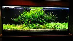 idee deco aquarium aquarium 160l youtube