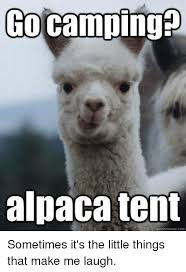 Make A Quick Meme - alpaca tent quickmemecom sometimes it s the little things that make