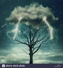 nature background tree below a cloud struck by lightning from