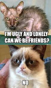 Ugly Cat Meme - that is one ugly cat i love grumpy cat pinterest cat grumpy