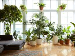 8 houseplants that can survive urban apartments low light and