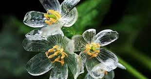 flowers images skeleton flowers become transparent when it rains bored panda