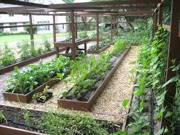 Inside Vegetable Garden by Starting Vegetable Garden Zandalus Net