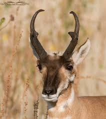 Utah wildlife images Wild and wonderful antelope island state park the wildlife jpg