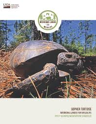 usda releases two year strategy to help gopher tortoise nrcs