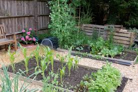 two sisters u0027 planting corn u0026 beans u2026 u2013 rock cottage year