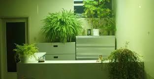 plante bureau cuisine atlas catalogue stunning plante pour bureau with cuisine