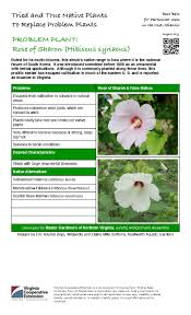 native plants extension master gardener problem plant rose of sharon master gardeners of northern virginia