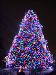 when does the lights at the toledo zoo start toledo zoo lights before christmas favorite time purple style