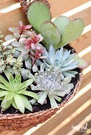 Cute Succulent Planters by Best 25 Succulent Wall Planter Ideas On Pinterest Succulent