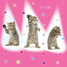tabby kittens birthday greeting card go wild dancing kitten funny