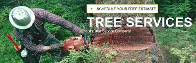 affordable tree services great pricing on tree removal trimming