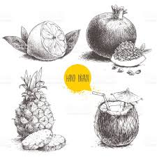 cocktail sketch hand drawn sketch style tropical fruits set half of lemon with