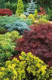 best 25 evergreen garden ideas on pinterest evergreen landscape