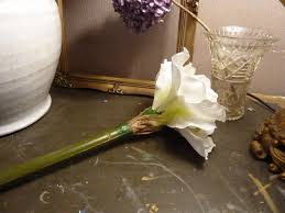 Silk Amaryllis Flowers - white artificial queen amaryllis heavenlyhomesandgardens co uk