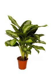 Office Pots by 67 Best Office Plants Images On Pinterest Office Plants Office