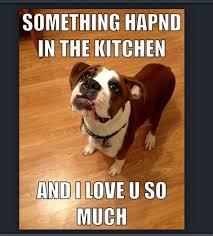 Much Dog Meme - th id oip 7 wni74x rezkdxqtwof7whaim