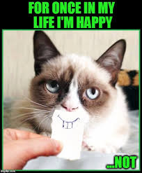 No Meme Grumpy Cat - don t call me grumpy cat no more imgflip