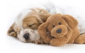 imagenes de animales whatsapp 30 cachorros y cachorritos para compartir en whatsapp o facebook