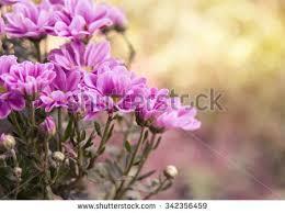 flowers garden stock images royalty free images u0026 vectors