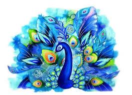 1041 best peacocks images on pinterest peacocks peacock