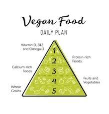 healthy eating pyramid royalty free vector image