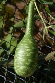 a simple gourd craft project for newbies