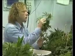 chambre culture indoor culture indoor cannabis fabrication d une chambre de culture 2 3