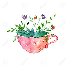 mint flowers cup of tea with herbs mint flowers and berries drawing in